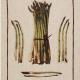 Linen Tea Towel Asparagus
